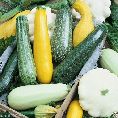 A photo showing a variety of zucchinis for saving seeds.