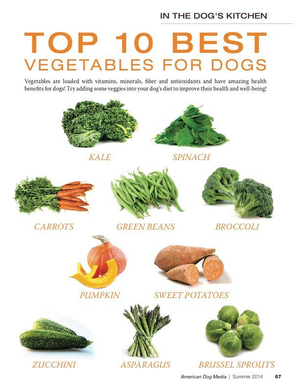A chart showing the top ten vegetables for dogs: kale, spinach, carrots, green beans, broccoli, pumpkin, sweet potatoes, zucchini, asparagus and brussel sprouts