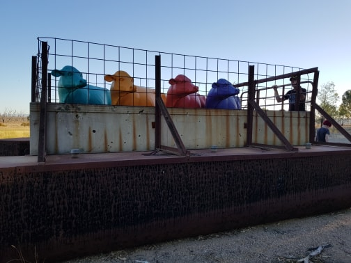 The coloured cows on the barge at Winton Wetlands