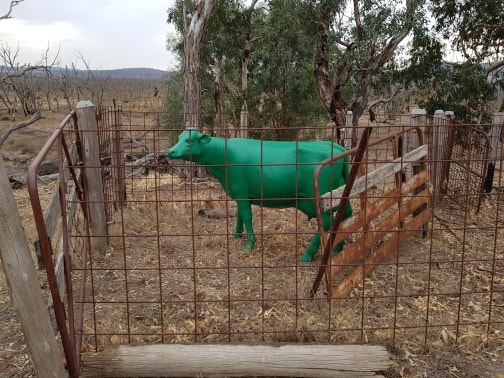 A green cow at Winton Wetlands